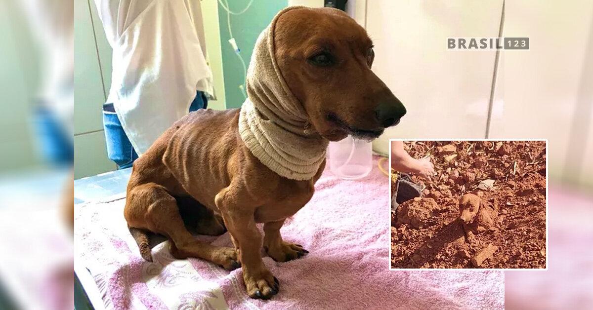 O casal que resgatou o animal constatou que, além de enterrado, o cachorro, que tem cerca de seis anos, também tinha um corte profundo no pescoço.